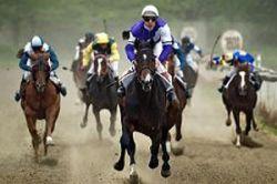 Элитные лошади Рамзана Кадырова