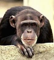 В Индии обезьяна похитила трехмесячную девочку