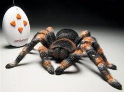 Мексиканский красноколенный тарантул ... на радиоуправлении