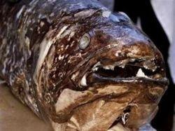 В сети попала рыба, вымершая 80 миллионов лет назад (фото)