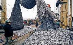 Ежегодный ущерб от браконьерства составляет 1 млрд долларов — Росрыболовство