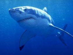 Пляжи мира, где больше всего акул