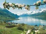 Норвежцы освоили летнюю езду на собачьих упряжках
