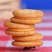 Учёные обнаружили у муравьёв индивидуальный опыт