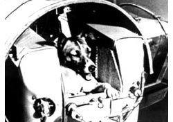В Москве появится памятник собаке Лайке, первой побывавшей в космосе