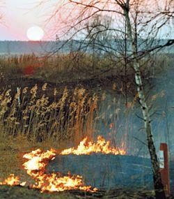 В Москве из-за жары начинают гореть торфяники