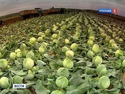 Небывалый урожай в Подмосковье портит импортную технику
