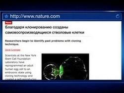 В США получили стволовые клетки путем клонирования