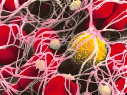 Стволовые клетки создали методом клонирования