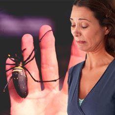 Обладаешь пауком - забудь о женщинах