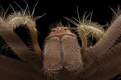 Очаровывающе-пугающий мир насекомых (фото)