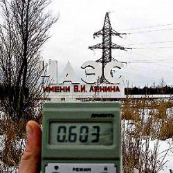 Чернобыль не стал процветающей экосистемой