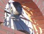 В Челябинске появился памятник президенту Владимиру Путину