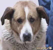 Быть ли «новоселью» в приюте для бездомных собак?