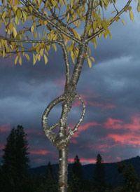 Мир необычных деревьев (фото)