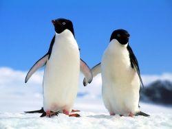 Европейским символом равноправия полов станет пингвин
