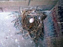 Гнездо из гвоздей (фото)