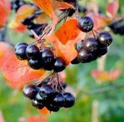 Темноокрашенные овощи лечат рак кишечника
