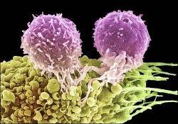 В MIT вырастили раковые стволовые клетки