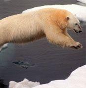 Харпер и Буш занялись инвентаризацией Арктики