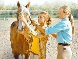 В Германии открылась школа лошадиного языка