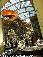 Ученые уверены, что динозавры вымерли бы и без глобального катаклизма