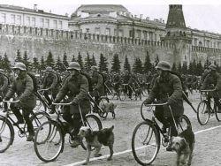 Самоотверженные солдаты ВОВ: противотанковые собаки