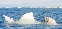 Ученые отдали Арктику России