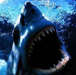 Испанская акула погибла от гастроэнтерита