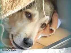 Почему в Германии нет бродячих собак