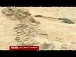 Ученые обнаружили десятки скелетов древних китов