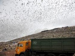 За утилизацию мусора в России предложили платить импортерам