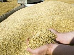 """""""По итогам сезона войдём в тройку крупнейших экспортёров зерна"""""""