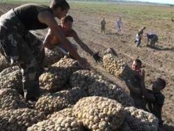 Беларусь: как достается валюта от экспорта сельхозпродукции?