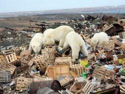 Экологическое состояние Арктики вызывает опасения ученых