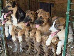 Столичный чиновник задержан за взятку от приюта для животных