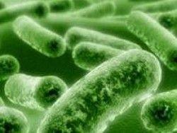 Ученые: бактерии тоже стареют