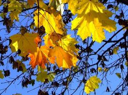 Москвичам обещают теплую осень