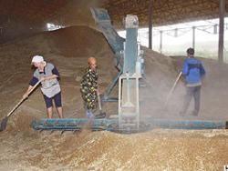 Цены на зерно достигли рекордных отметок на мировых рынках