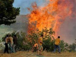В Греции задержан подозреваемый в лесных поджогах