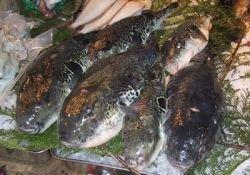 Рыба-убйица унесла 15 жизней в Тайланде