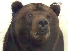 На Камчатке медведи растерзали второго человека за последние несколько дней
