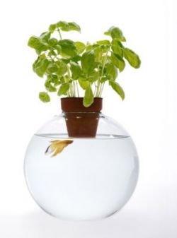 Креативные аквариумы для рыбок (фото)