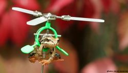 Почему лягушки не летают? (фото)