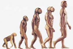 Предки Homo sapiens были не менее умными?