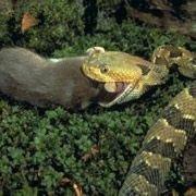 Змеи могут голодать и при этом расти в длину