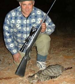 Австралийцы будут есть диких кошек