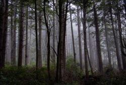 Исследователи нашли самородное золото в остатках гнилых деревьев