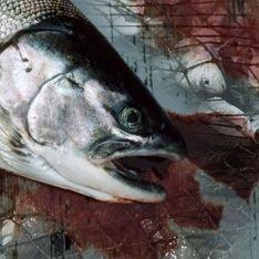 В Мировом океане незаметно закончилась вся рыба