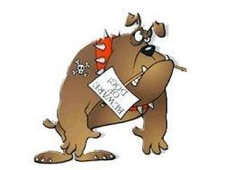 Киевские власти намерены повесить на собак номерные знаки